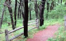 Cape Cod Attractions: photo of Smalls Swamp Trail one of the Cape Cod trails in Truro, MA