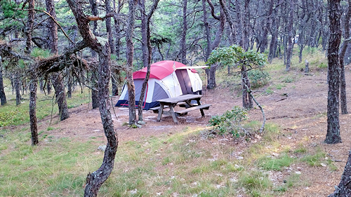 image of one of the secluded campsites at North of Highland making this Cape Cod campgrounds the preferred location for tent campers.