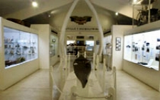 photo showing inside the Cape Cod museum at Pilgrim Monument in Provincetown