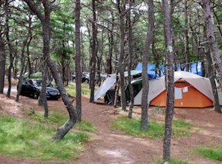 photo showing tents on Cape Cod campsites at North of Highland Camping Area