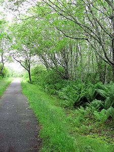 photo of Cape Cod Bike Trails - Head of the Meadow in North Truro with lush plants and trees